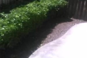 Photo #5: Steven's Gardening Service