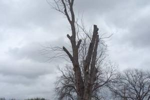 Photo #1: Juan Mata Tree service