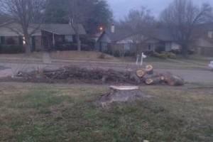 Photo #2: Juan Mata Tree service