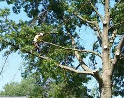 Photo #1: Rodey's Tree Service