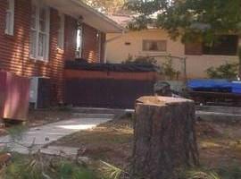 Photo #1: The Treeman Tree Services