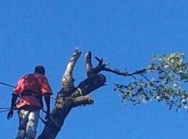 Photo #2: The Treeman Tree Services
