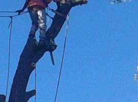 Photo #3: The Treeman Tree Services