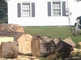 Photo #4: The Treeman Tree Services