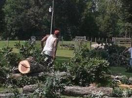 Photo #5: The Treeman Tree Services