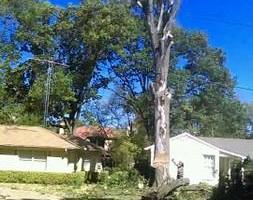 Photo #1: Bladi's Tree Service