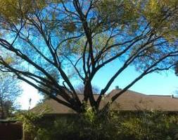 Photo #2: Bladi's Tree Service