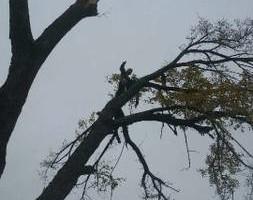 Photo #5: Bladi's Tree Service