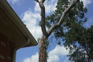 Photo #1: Rivas tree service