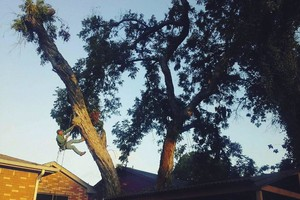 Photo #2: Rivas tree service