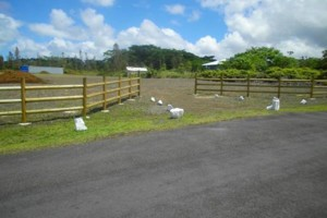 Photo #1: Ranch Fencing