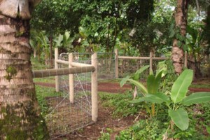 Photo #5: Ranch Fencing