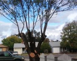 Photo #4: Hembrees tree service