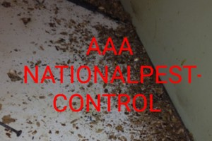 Photo #3: AAA NATIONAL PEST CONTROL