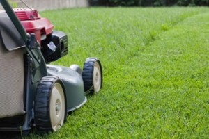 Photo #1: 559 Pro Clean & Lawn