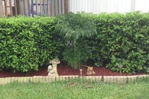 Photo #1: Rodney's Lawn Care