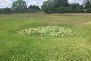 Photo #3: Rodney's Lawn Care