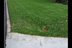 Photo #3: JDB'S Quality Lawn Service