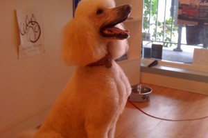 Photo #2: Star Grooming on Fifth
