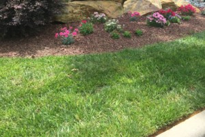 Photo #2: Abundant Lawn Care