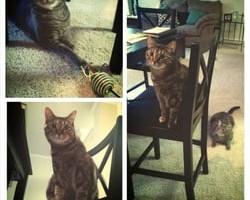 Photo #2: Prestigious Pets