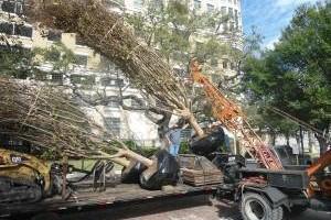Photo #2: The Tree Planters LLC