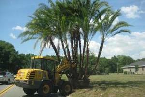 Photo #3: The Tree Planters LLC
