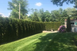 Photo #1: Ty's Total Lawn Care