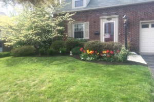 Photo #3: Ty's Total Lawn Care