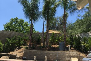 Photo #6: Aguilera's Lawn care & Irrigation