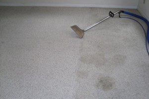Photo #2: Blue Rooster Carpet Cleaning