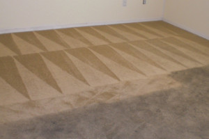 Photo #3: Blue Rooster Carpet Cleaning