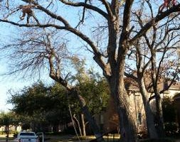 Photo #4: 7 Oaks Tree Service