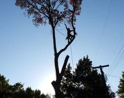 Photo #5: 7 Oaks Tree Service