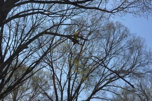 Photo #4: Arbor Country Tree Service