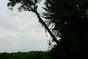 Photo #6: Arbor Country Tree Service