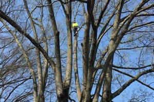 Photo #8: Arbor Country Tree Service