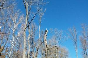 Photo #9: Arbor Country Tree Service