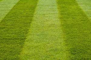 Photo #1: The Big Lawn theory