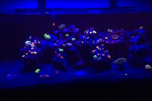 Photo #2: FLORIDA FINS AND SCALES INC