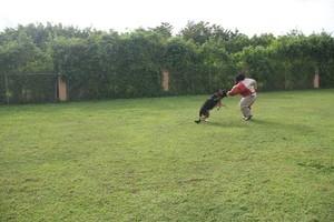 Photo #1: ECONOMICAL DOG TRAINING