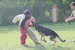 Photo #2: ECONOMICAL DOG TRAINING