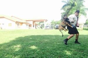 Photo #3: ECONOMICAL DOG TRAINING