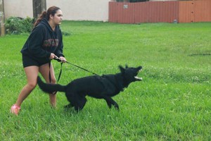 Photo #5: ECONOMICAL DOG TRAINING