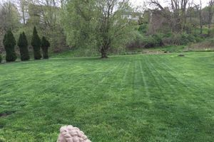 Photo #5: Scott & Sons Lawn Care