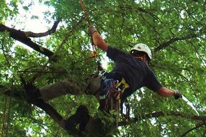 Photo #1: Brown tree service