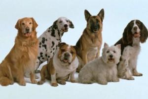 Photo #1: PET SITTER & DOG WALKER