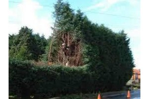 Photo #1: Affordable Tree Service by ISA Arborist. Big/Small jobs welcomed!