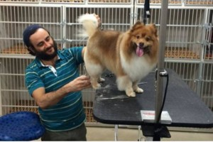 Photo #1: Free full dog grooming for long hair dogs