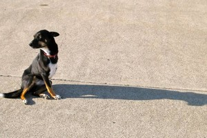 Photo #1: Dog Daycare & Boarding For Dogs in the east bay and beyond